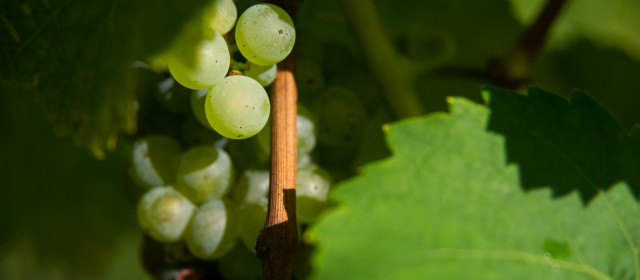 Notes on starting the WSET Diploma